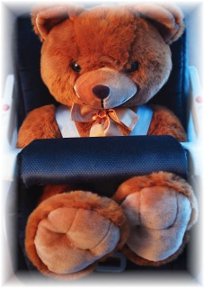 Teddy Bear in a car seat
